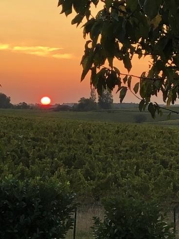 日の出、土いじり、タルト・オ・シトロン_e0243221_23463952.jpg