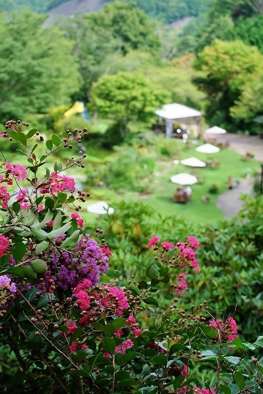 植物から作られた庭を歩く_b0314043_08450497.jpg