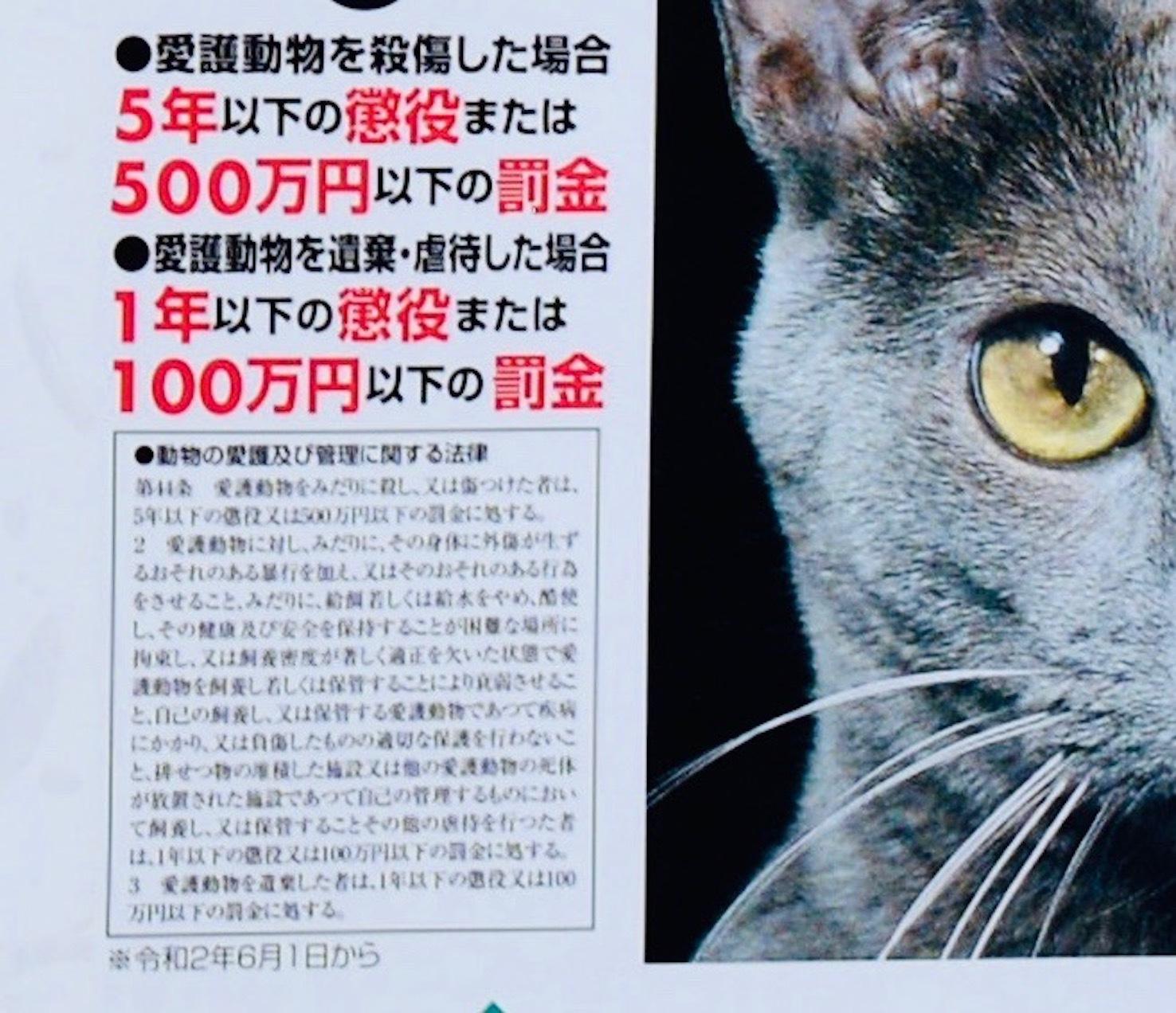 動物愛護週間(9月20日〜26日)_d0073743_15404926.jpeg