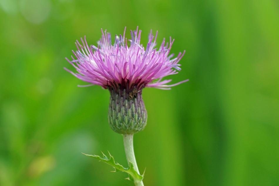 野の花  2020-10-17_e0229455_19191253.jpg