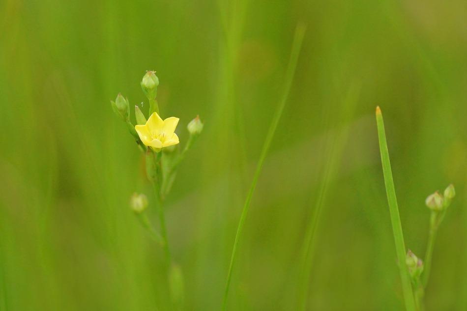 野の花  2020-10-17_e0229455_19192727.jpg