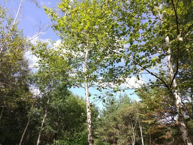 秋の空気_f0364455_13135268.jpg