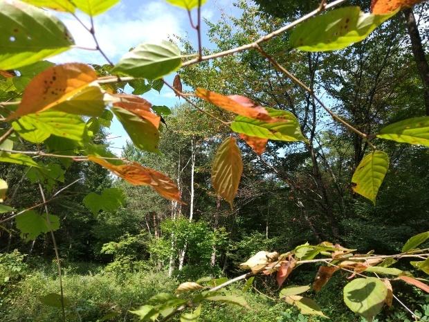 秋の空気_f0364455_15224808.jpg