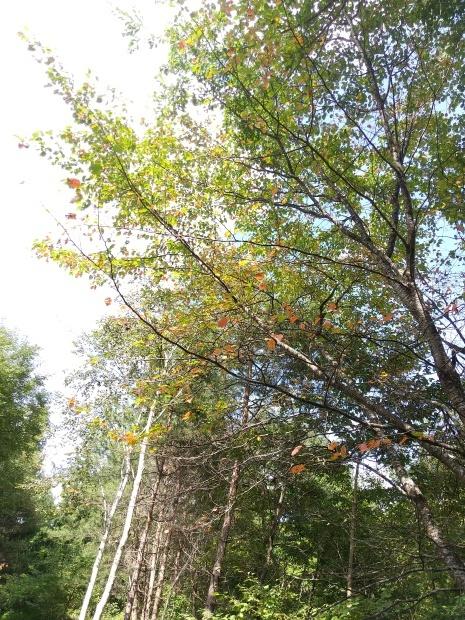 秋の空気_f0364455_15231237.jpg