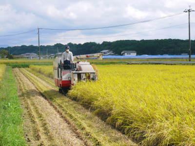 七城米 長尾農園 今年も美しく順調に成長中!稲刈り前の様子!稲刈りは10月10日前後からスタートです!_a0254656_17315120.jpg