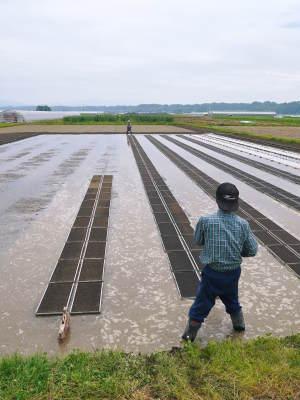 七城米 長尾農園 今年も美しく順調に成長中!稲刈り前の様子!稲刈りは10月10日前後からスタートです!_a0254656_17370002.jpg