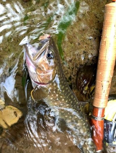 久しぶりに釣行写真です。_e0029256_09054097.jpg