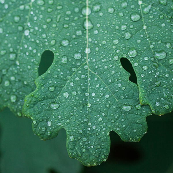 雨粒ダイヤ。_b0022268_18161549.jpg