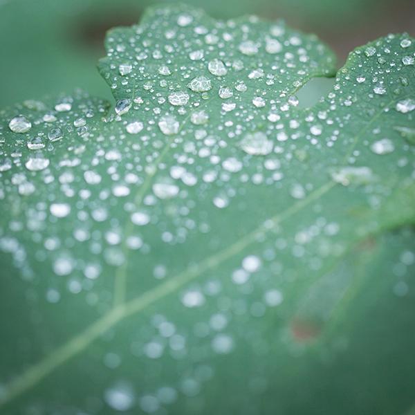 雨粒ダイヤ。_b0022268_18172567.jpg