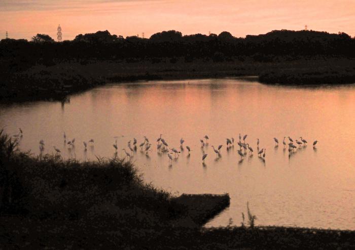 美しき湿原があやしくなったコサギ等の色々_d0290240_16142900.jpg