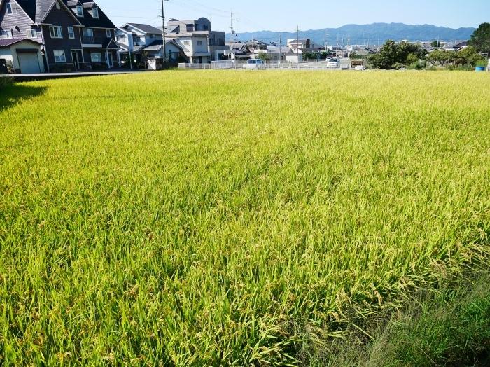田園風景  2020-09-24 00:00_b0093754_23104489.jpg