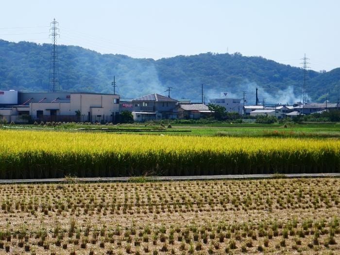 田園風景  2020-09-24 00:00_b0093754_23131820.jpg