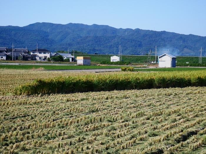 田園風景  2020-09-24 00:00_b0093754_23141307.jpg