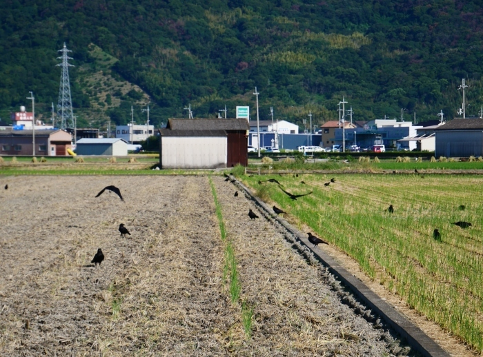田園風景  2020-09-24 00:00_b0093754_23143624.jpg