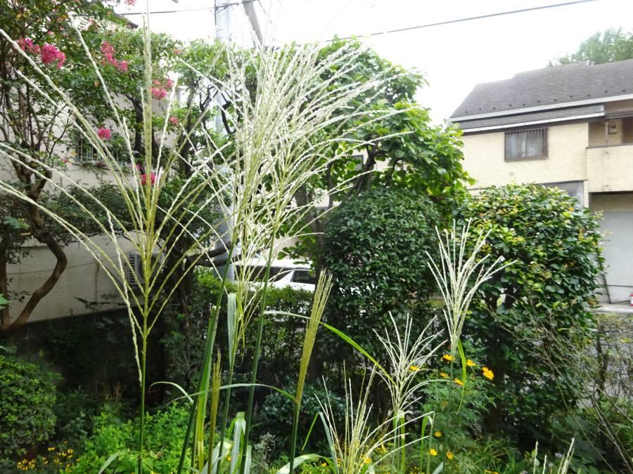 庭の花 秋その1_f0059673_11354210.jpg