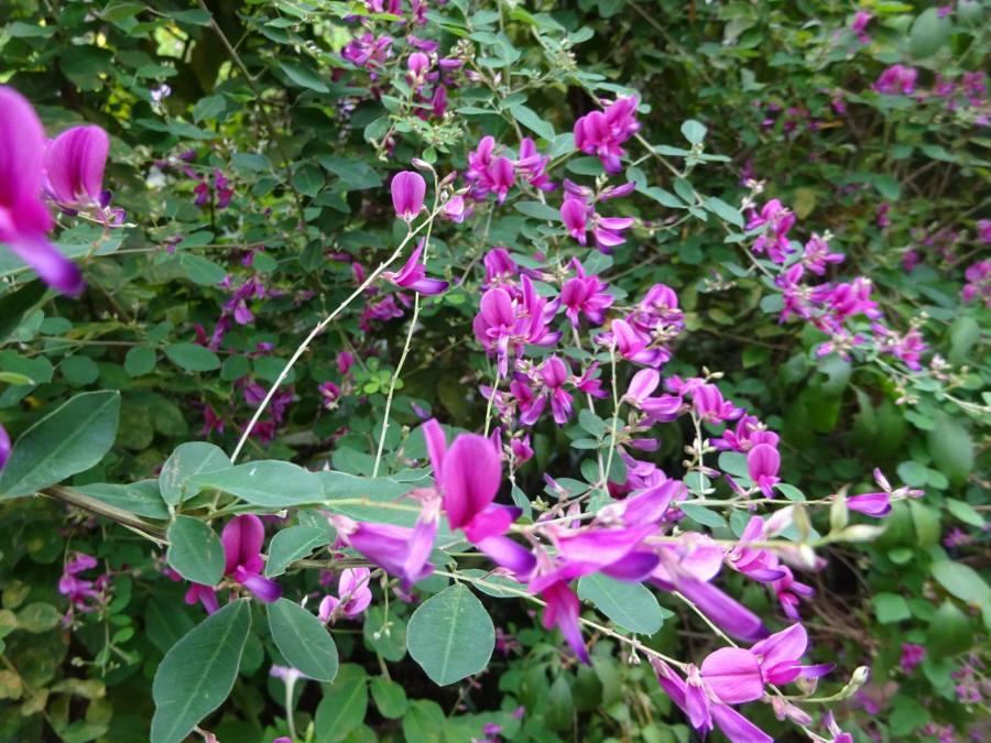 庭の花 秋その2_f0059673_18164168.jpg