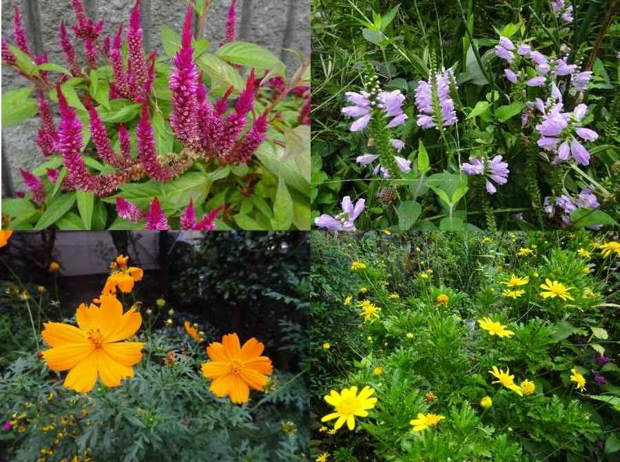 庭の花 秋その2_f0059673_18181446.jpg
