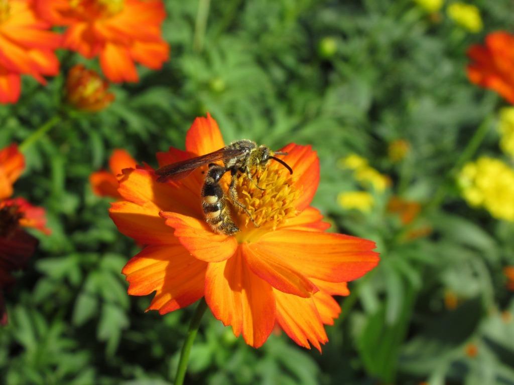 秋の植物たち_d0384190_15315884.jpg