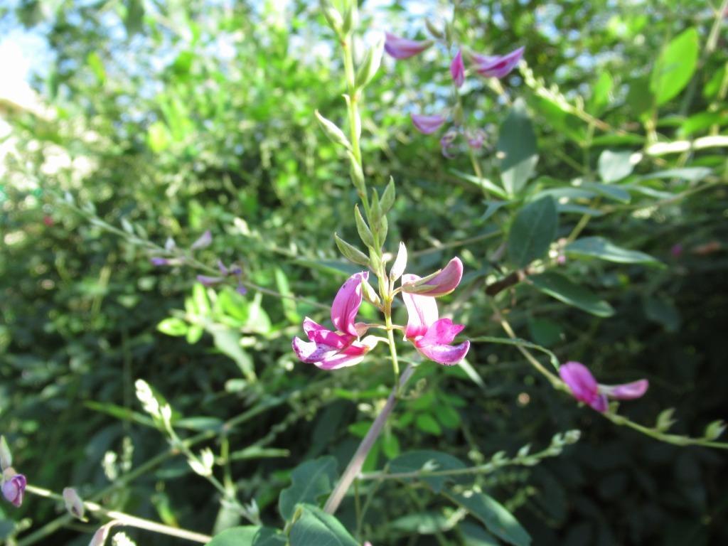 秋の植物たち_d0384190_15351895.jpg