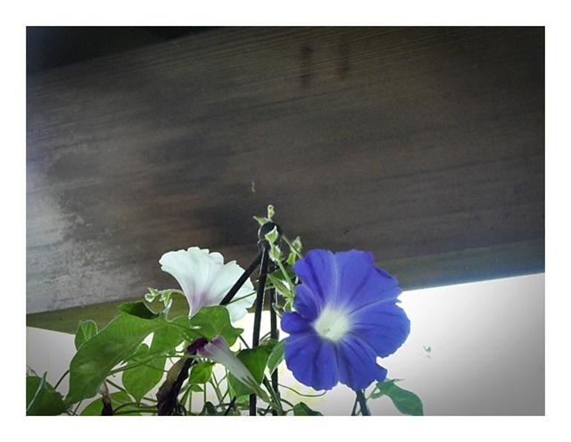 庭の整理つづき_e0379198_01003287.jpg