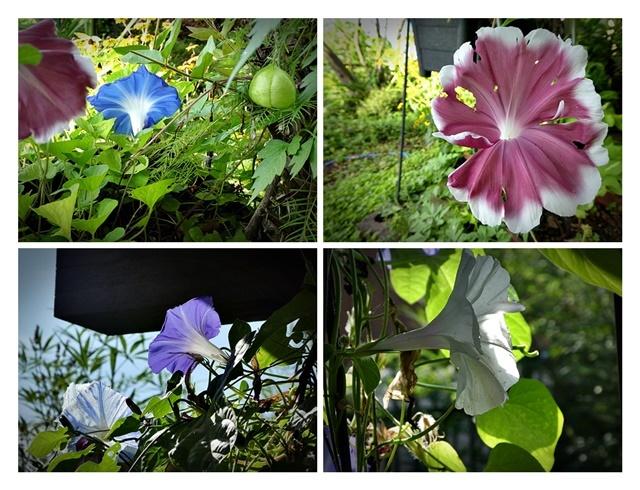 庭の整理つづき_e0379198_01010673.jpg