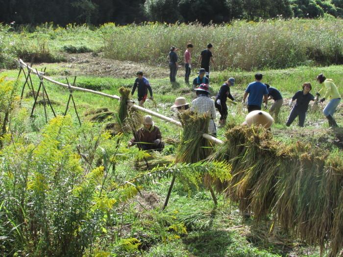 10月4日(日曜)は稲刈りをします_b0175921_14233942.jpg
