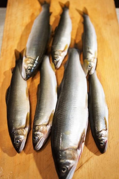 ■晩ご飯【鮎フライ】お向かいさんの釣り果(相模川の鮎を頂きました^^)_b0033423_12572395.jpg