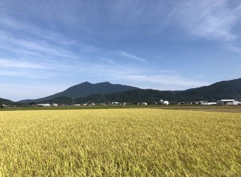 稲刈りの季節と長嶺さんの器_b0100229_15131977.jpg