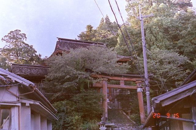 9月15日早朝 Nikon F-6 50mm 1.4 FUJI superia premium 400二浴現像照生 _d0138130_14384896.jpg