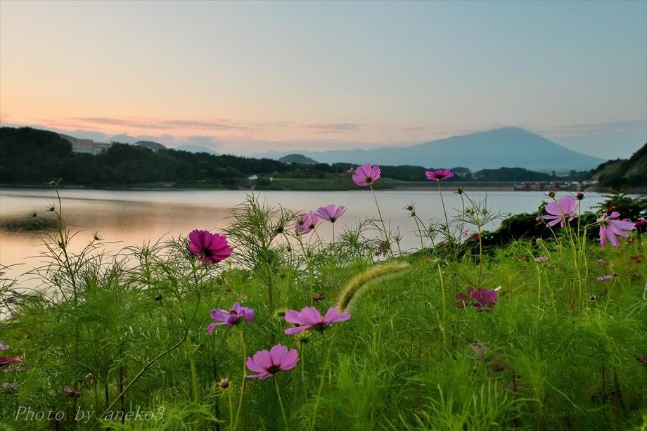 みちのく御所湖秋桜景_d0067934_11172471.jpg