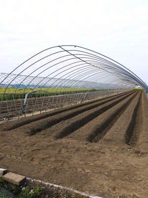 完熟紅ほっぺ まもなく定植!栽培ハウスの今の様子と元気な苗床の苗!こだわりの減農薬栽培で育てます!_a0254656_18463147.jpg