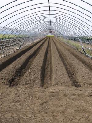 完熟紅ほっぺ まもなく定植!栽培ハウスの今の様子と元気な苗床の苗!こだわりの減農薬栽培で育てます!_a0254656_18484594.jpg