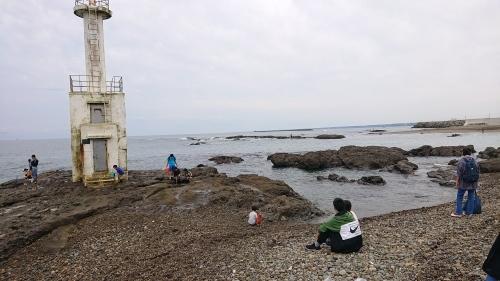 大洗海岸で貝化石発見_d0096268_20502503.jpg