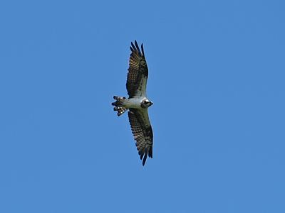 \'20年9月木曽岬干拓鳥類生息調査_f0160773_09394463.jpg