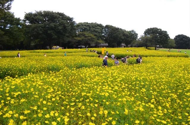 昭和記念公園(1)_a0223597_16405127.jpg