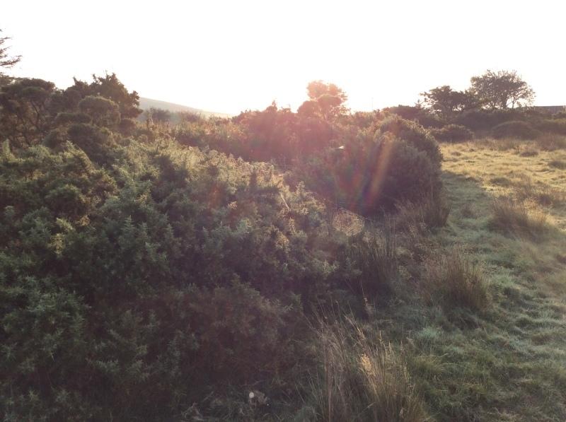 秋分を楽しく過ごすにはー霧の精霊からのメッセージも_b0110999_17463465.jpeg