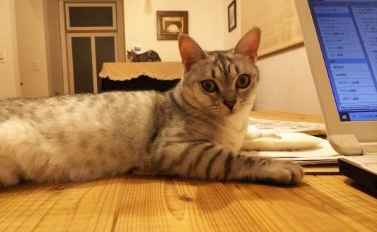 猫・ねこ・ネコ Ⅱ_a0284408_20181841.jpg