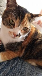 猫・ねこ・ネコ Ⅱ_a0284408_20203268.jpg