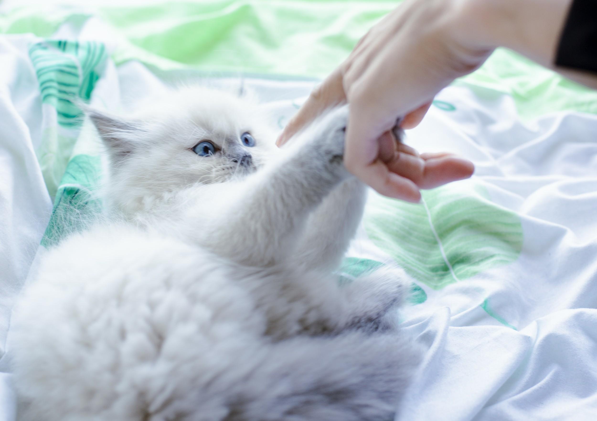養寵物小心寵物依賴症_b0344610_12511812.jpg