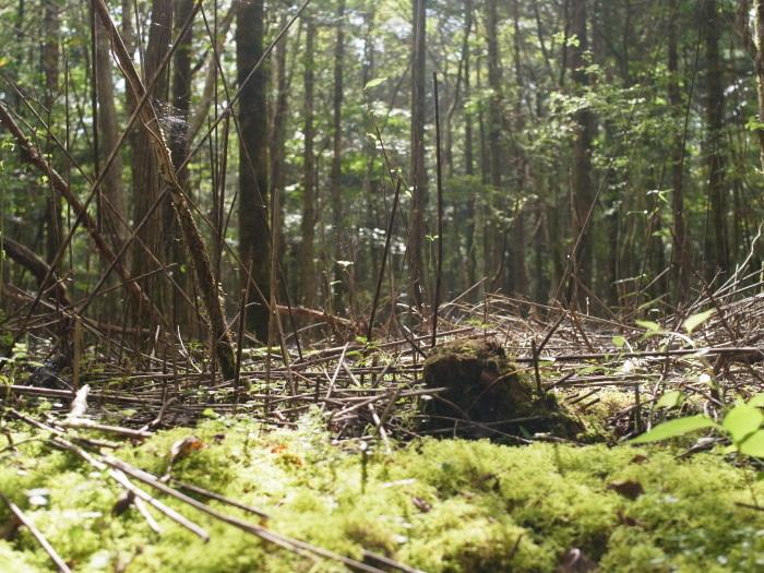 富士山の裾野の森_e0276411_23415390.jpg