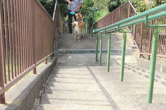 ランと階段_e0371017_22201406.jpg