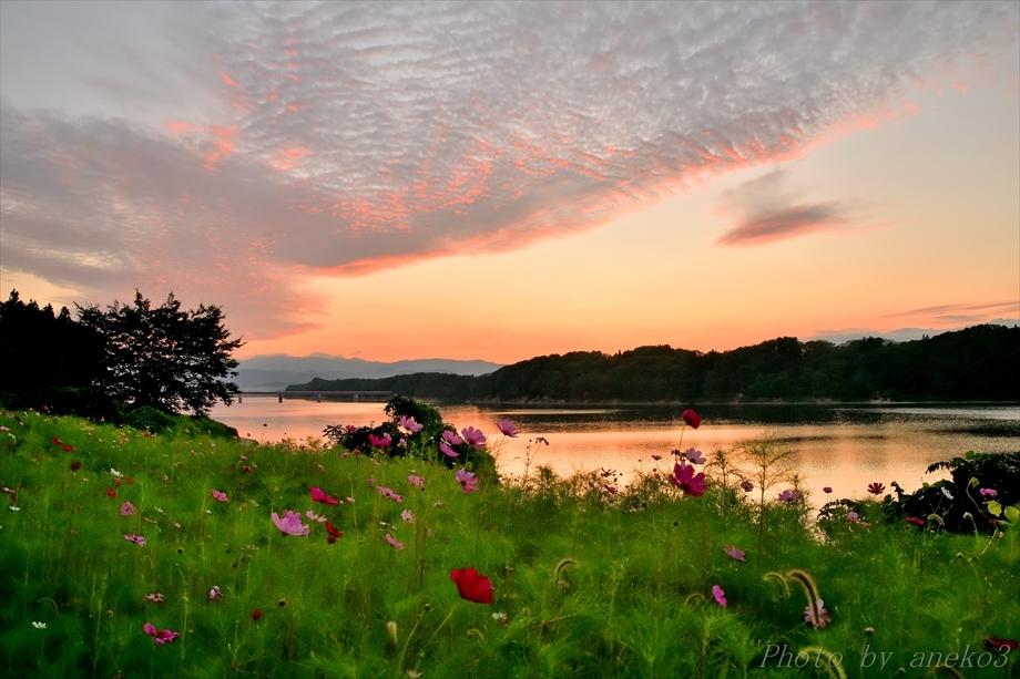 みちのく御所湖秋桜景2_d0067934_09233973.jpg