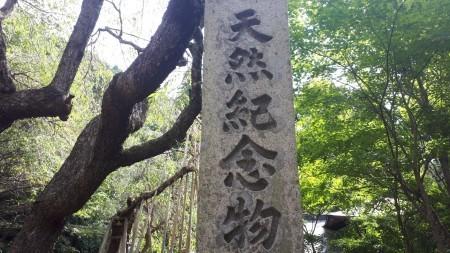 常照皇寺 苔の導き - 京都グルメタクシー おいしい京都