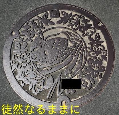 タテハモドキ  in  福岡(生息地最北端)_d0285540_06411145.jpg