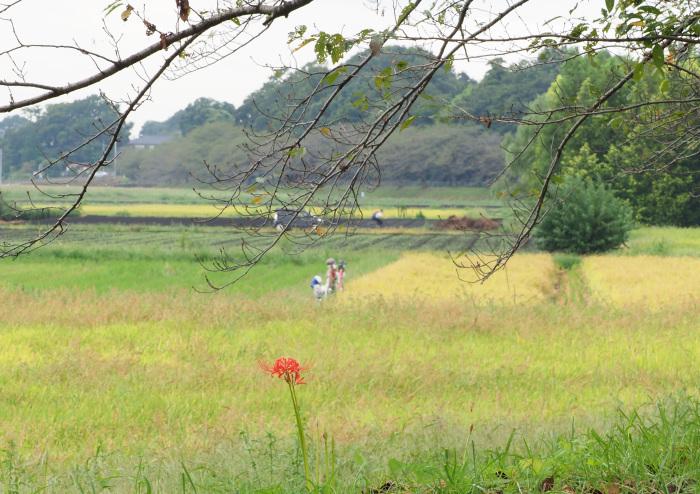 ハヤブサは良いなー池面を自由に飛翔_d0290240_13410573.jpg