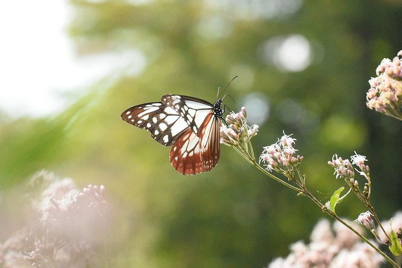 4連休最終日/蝶の楽園(9月22日)_e0405343_17221661.jpg