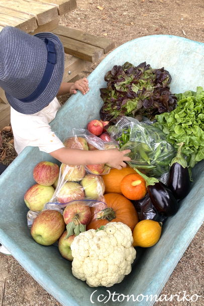 パリ郊外の農場で野菜やフルーツを収穫しよう!_c0024345_23085439.jpg