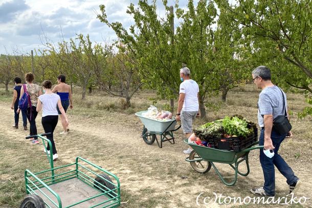 パリ郊外の農場で野菜やフルーツを収穫しよう!_c0024345_23085450.jpg