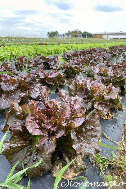 パリ郊外の農場で野菜やフルーツを収穫しよう!_c0024345_23085559.jpg