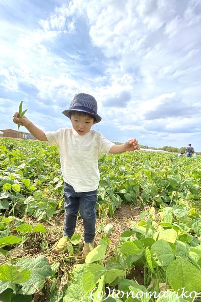 パリ郊外の農場で野菜やフルーツを収穫しよう!_c0024345_23085638.jpg